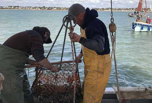 Hauling in a dredge filled with oysters, slipper limpets, starfish and much more besides