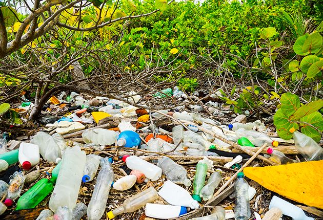Plastic pollution chokes the mangrove swamps. Mangrove is vital in protecting islands from storms and hurricanes. Credit: Sophie Dingwall