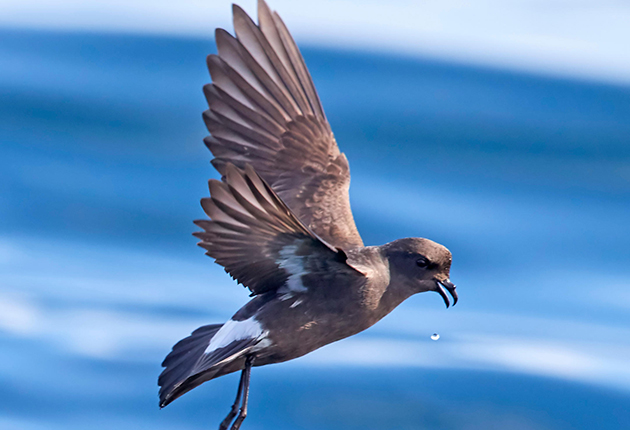 The best time to spot a storm petrel at Cape Clear is April-August. Credit: Alamy Stock Photo