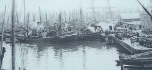 Herring fleet in Lerwick