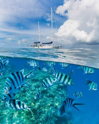 sailing across the pacific snorkelling