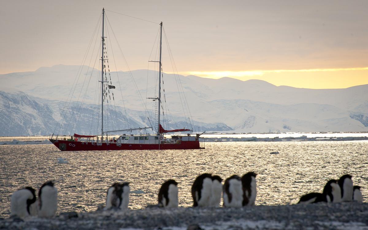 [Imagen: sailing-antarctica-infinity-penguins-anc...nderer.jpg]