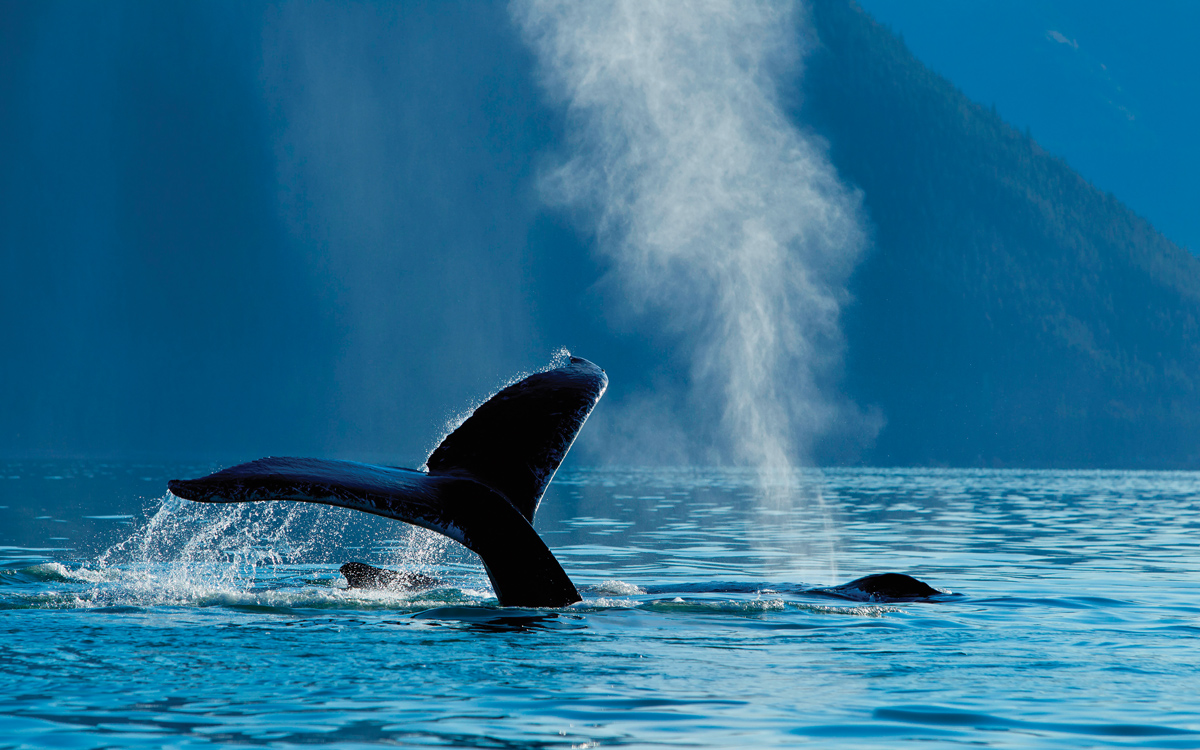sailing-alaska-humpback-whale-credit-Design-Pics-Inc-Alamy