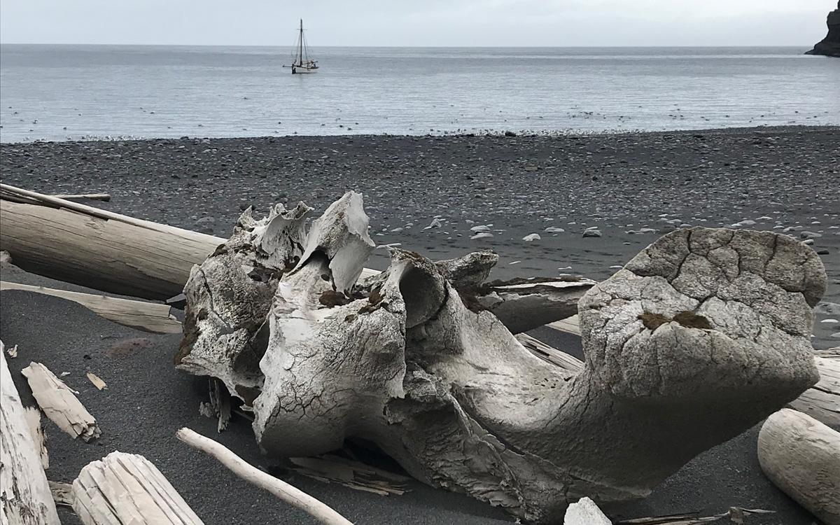 sailing-Jan-Mayen-island-integrity-Kvalrossbukta-beach-whalebones
