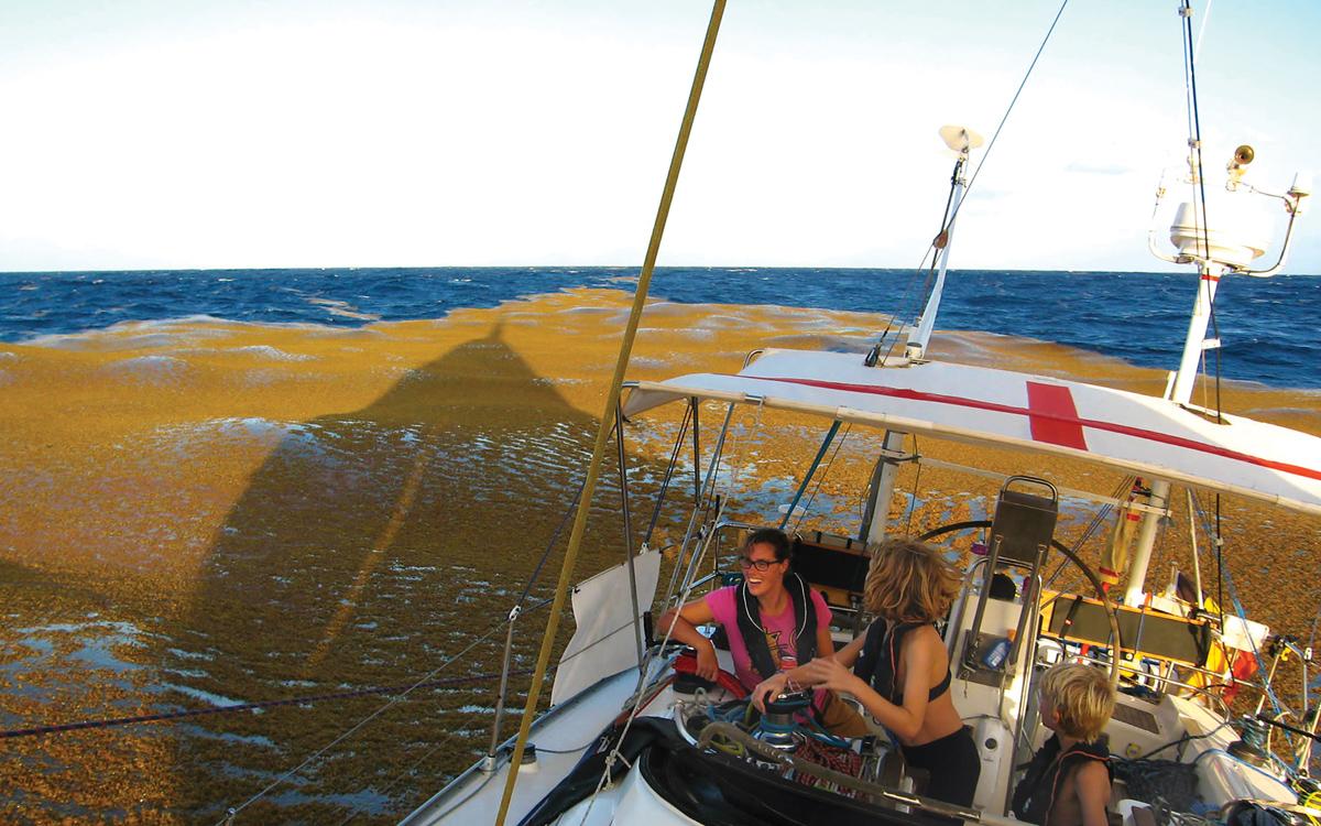 Why sargassum weed is posing increasing problems for Transatlantic sailors