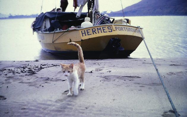 The Hermes crew befriended Nell the cat in the Far East