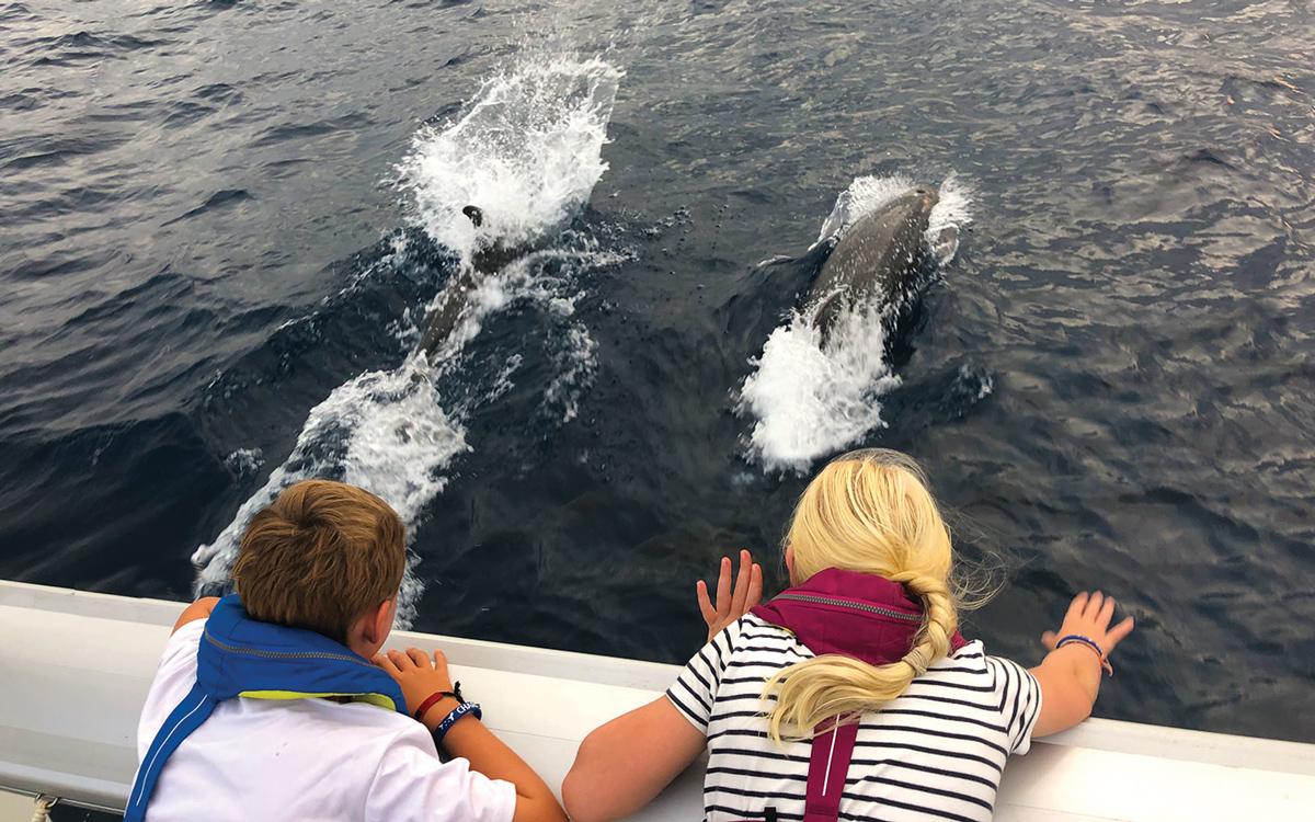 pacific-sailing-homeschooling-World-ARC2019-dolphin-spotting