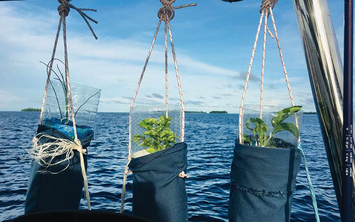 growing-food-on-boats-hanging-pots-credit-Clearwater-Sally