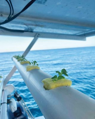 growing-food-on-boats-hydroponic-sponges-credit-Chasing-Eden