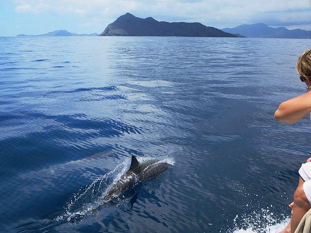 wildlife watching Environmental Sailing guide