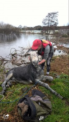 Donkey rescued from flood