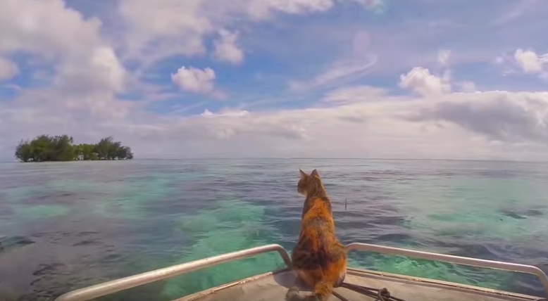 Woman sails solo with her rescue cat