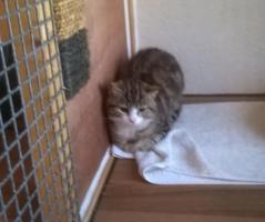 Stowaway cat has now been returned home