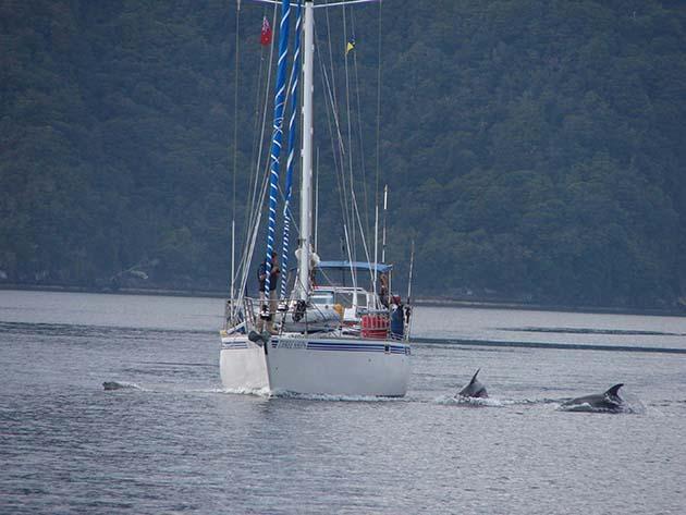 Fiona and Chris Jones have dolphin companions