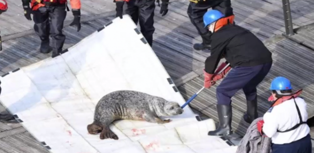 Seal rescue on the Thames