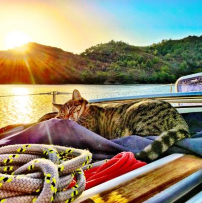 A tabby car sleep on rope on board a boat