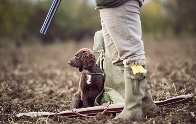 How to get your gundog to sit.