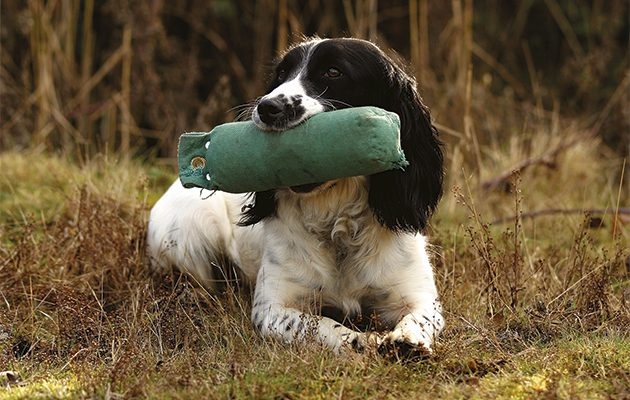 All round gundogs. Dummy