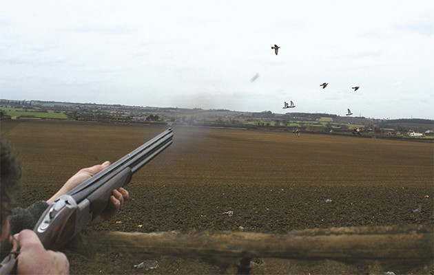 Pigeon shooting in Cheshire