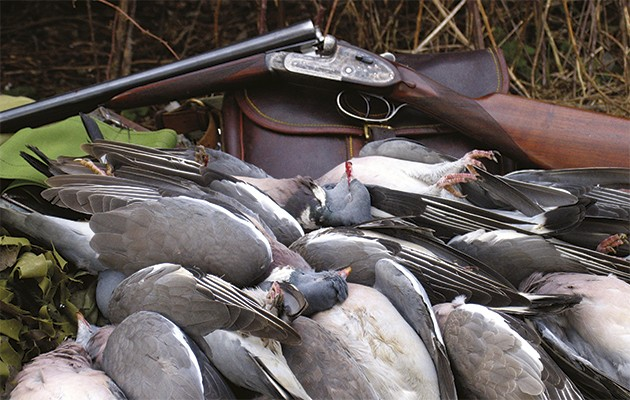Pigeon shooting in the UK.