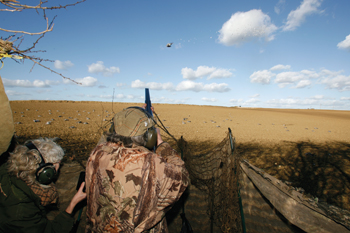 Pigeon shooting: a master class - The Field