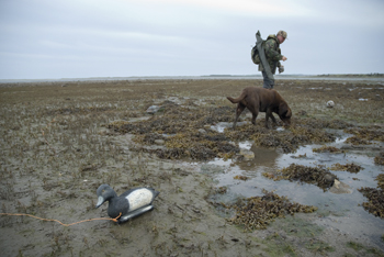 Wildfowling on Lindisfarne 2