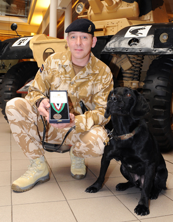 Treo, the arms and explosives search dog and winner of the 2009 Dickin Medal