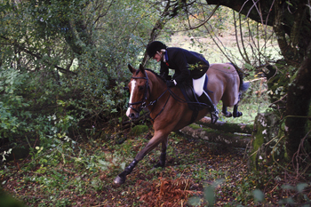 Rider in the Mid Devon Country