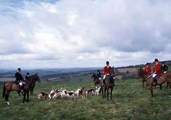 The Devon and Somerset staghounds