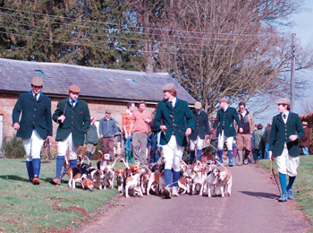 Stowe Beagles move off from a meet