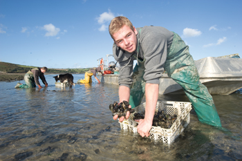 Luke Marshall crates up mussels for his father