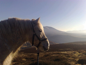 The Highland Pony is part of the landscape