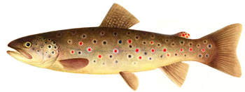 Top ten trout recipes