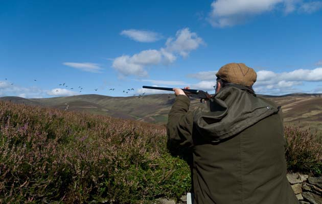 Grouse Shooting tips