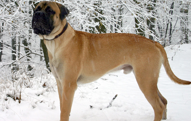 Which Dog Breed Is Best For My Family