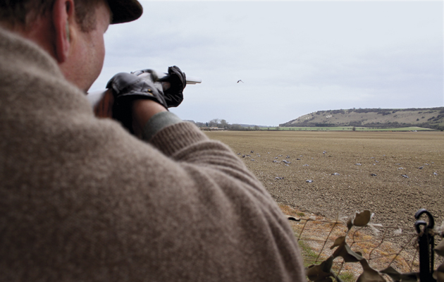 Expert guide to pigeon shooting. Taking aim at the grey grouse.