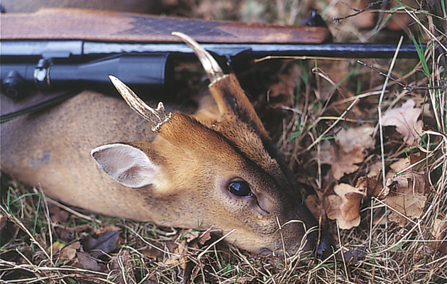 English Heritage 'appalled' by images of hunters posing with deer allegedly killed on one of its estates