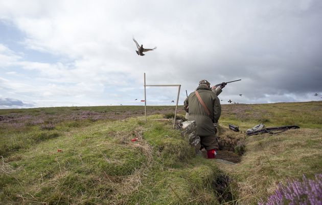 How to shoot grouse safely