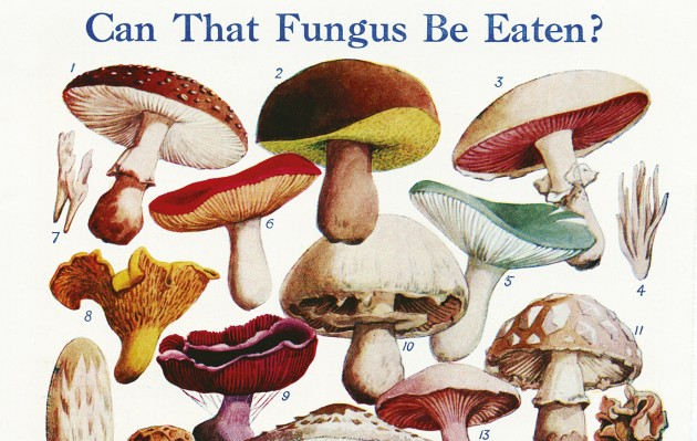 How to forage for mushrooms.