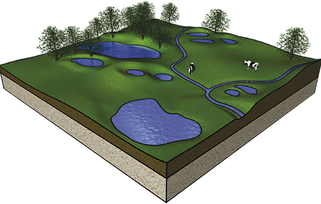 How to make a pond: reverse a century of loss - The Field