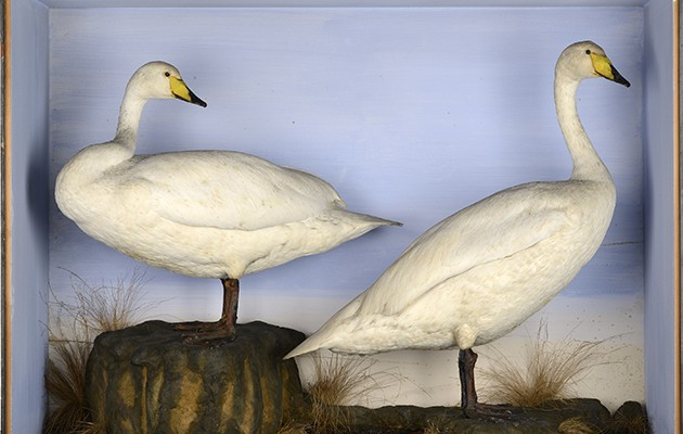 Summers Place Auctions: taxidermy sale - The Field