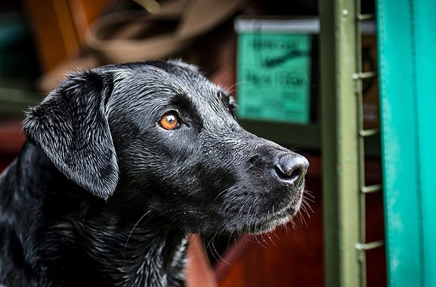 The Field's Gundog Awards 2017