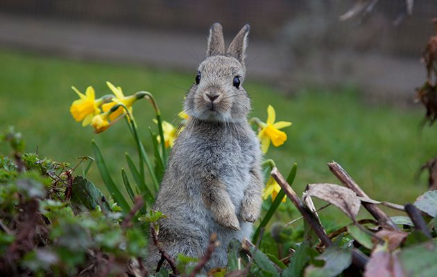 Keep rabbits out of your garden