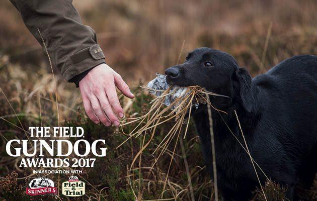 The Field Gundog Awards