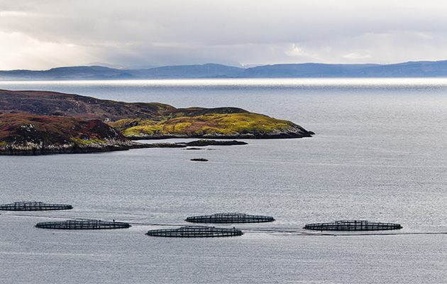 Sustainable seafood production