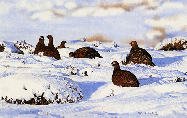 Wildlife Christmas Cards.The Best Country Christmas Cards For Sporting Festive Cheer