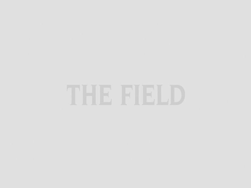 THe Field cover January 2020