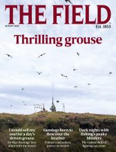 THE FIELD cover