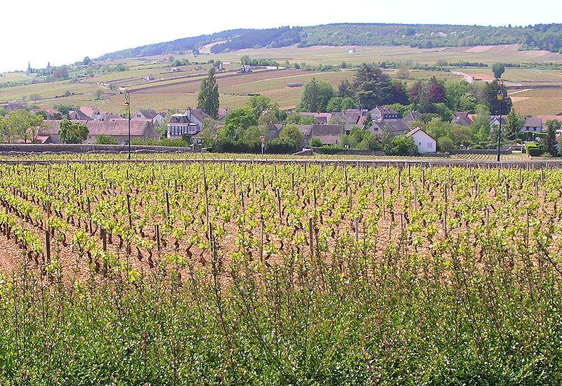 Meursault Burgundy - red burgundy