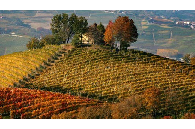 Piedmont vineyards